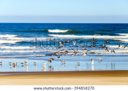 Beach and Pacific Ocean at Lincoln City, Oregon with seagulls - stock photo