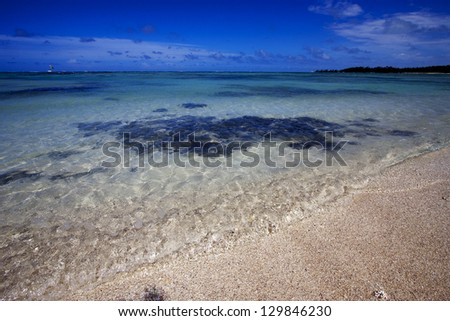 beach and seaweed  in ile du cerfs mauritius