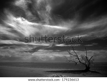 Beach at low tide with mangrove tree