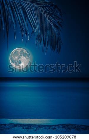 Beach at night with a  full moon reflecting on the water and a coconut palm on the foreground toned in blue shades - stock photo
