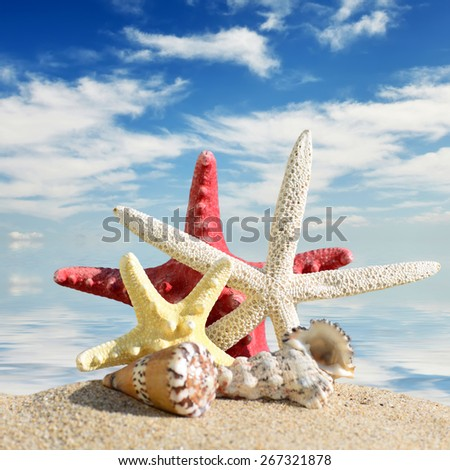 Beach background.Seashells and starfish on a beach sand. In the background of sea and sky - stock photo
