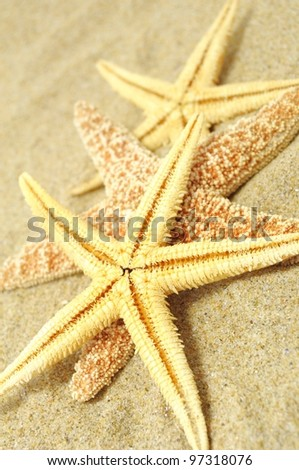 beach background with sand, shells and seastar