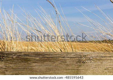 beach background with wooden fence