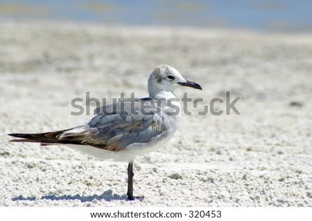Beach Bird - stock photo