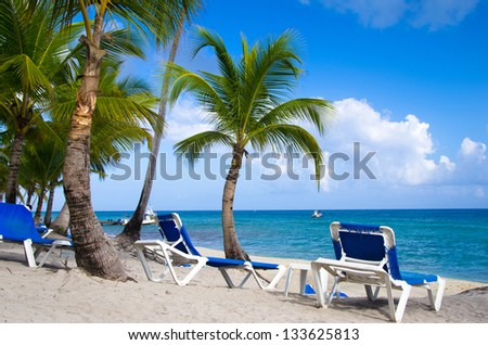 Beach chairs under a palm tree