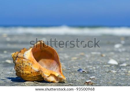 Beach concept - stock photo