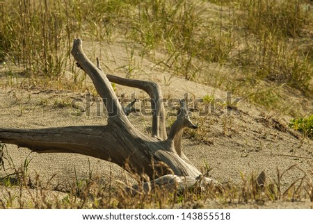 Beach driftwood on grassy sand dunes - stock photo