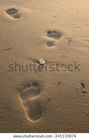 Beach footprints with shell