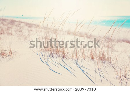 beach grasses on the seashore