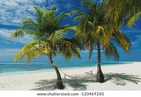 Beach Hammock between two beautiful palm trees