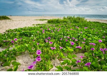 Beach in Sebastian, Florida in the Summer. - stock photo