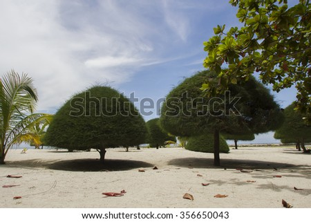 beach landscape with trees triangular shapes