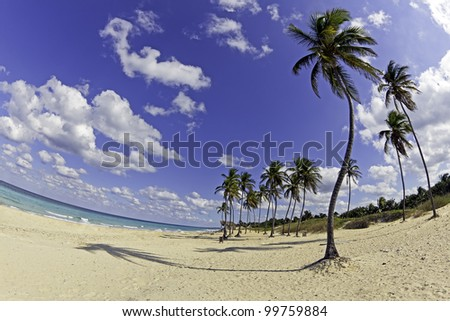 Beach On The Sunny Day in Tropic