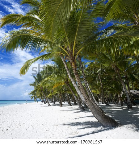 Beach on the tropical island. Clear blue water, sand and palm trees. Beautiful vacation spot