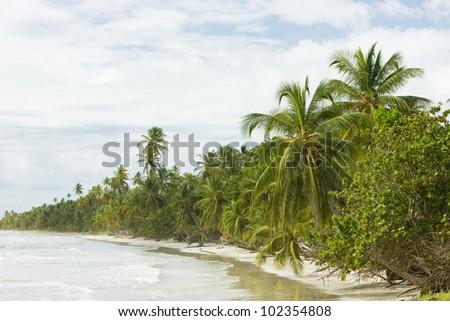 beach on Tobago Island - stock photo