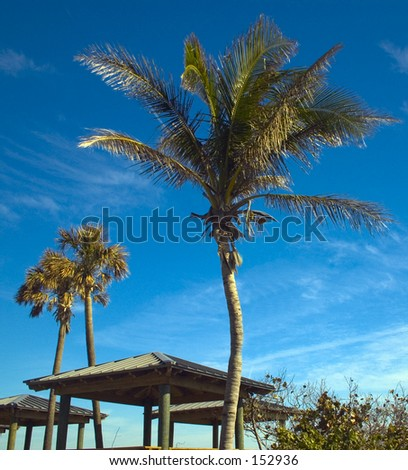Beach Palm Trees (exclusive at shutterstock) - stock photo