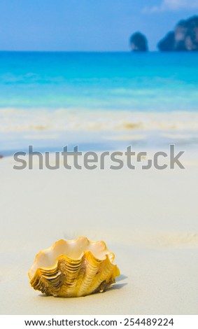 Beach Pearl Exotic Shore  - stock photo