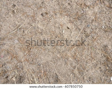 Beach sand with conifer needles