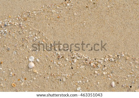 beach sand with shells