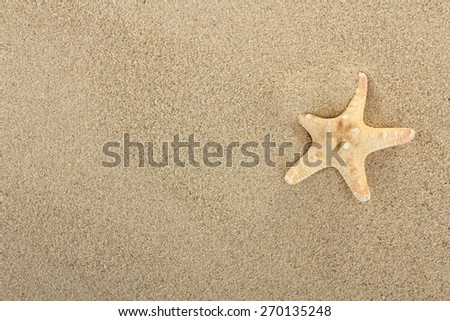Beach sand with shells and starfish - stock photo