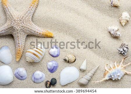 beach sand with shells and starfish - stock photo