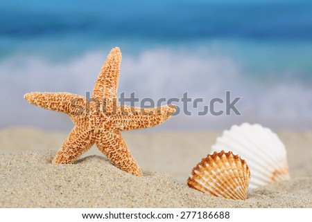 Beach scene in summer on vacation with sand, sea shells and stars, copyspace - stock photo