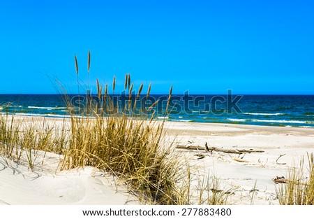 Beach sea and dunes with grass under blue sky, Leba, Baltic Sea, Poland  - stock photo