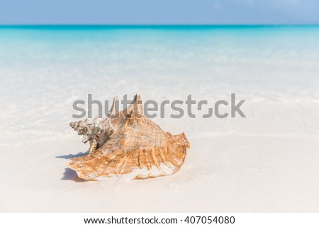 Beach shell ocean conch copyspace background. Serene landscape with seashell lying on white sand in water for tropical summer vacations concept. Travel in the Caribbean.  - stock photo