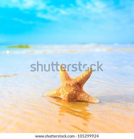 Beach Star Sea - stock photo