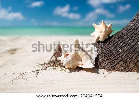 beach, summer and holidays concept - close up of seashell on tropical beach - stock photo