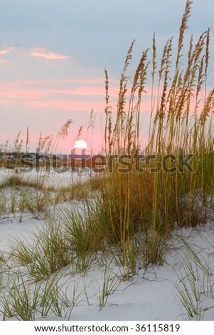 Beach Sunset Through the Sea Oates - stock photo