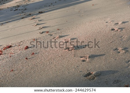 Beach travel vacation concept - footsteps on sand on Vero Beach, Florida - stock photo