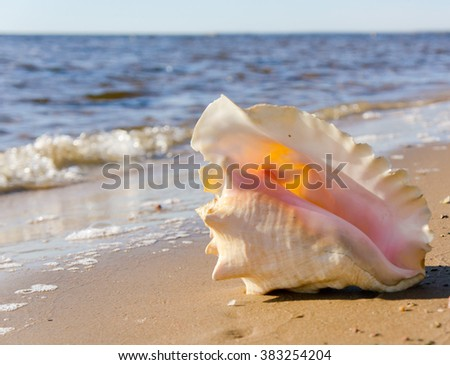 Beach Treasure Seascape Divine  - stock photo