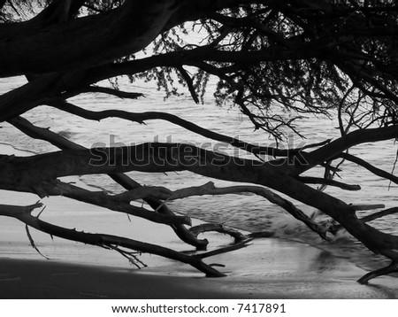 beach trees in hawaii - stock photo