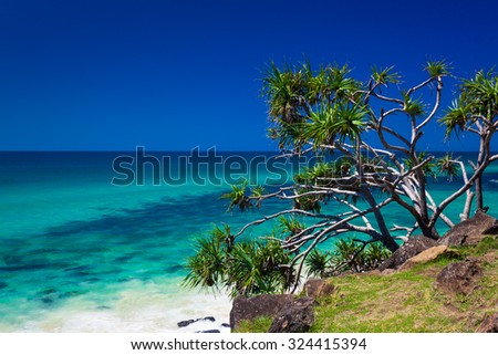 Beach view with a tree in Burleigh Heads National Park, Gold Coast, Australia - stock photo