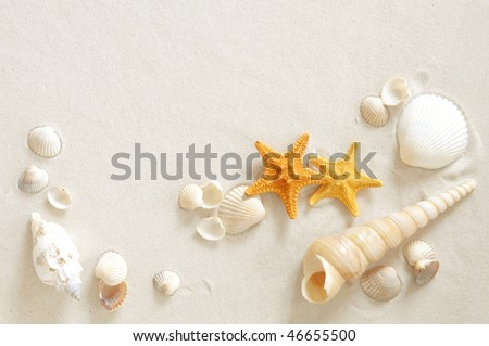 Beach with a lot of seashells and starfish