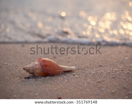 Beach with conch shell - stock photo