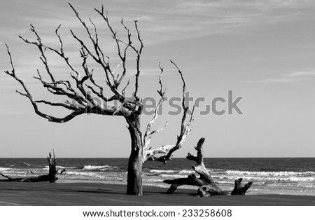 Beach with driftwood - stock photo