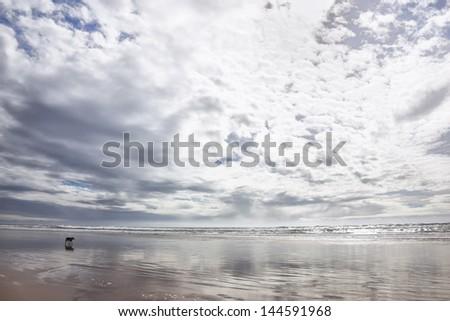 Beach with German Shepherd dog in Agadir at the Atlantic coast, Morocco. - stock photo