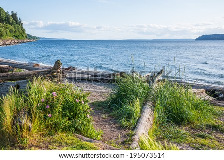 Beach with Grasses and Flowering and other Natural Vegetation and Driftwood. Pacific Northwest north of Seattle. Copy space. - stock photo