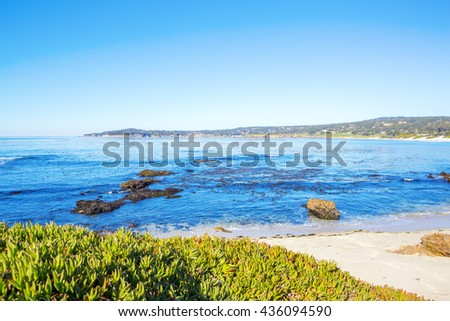 Beach with Grasses and Flowering and other Natural Vegetation. Pacific Northwest north of Seattle.  - stock photo