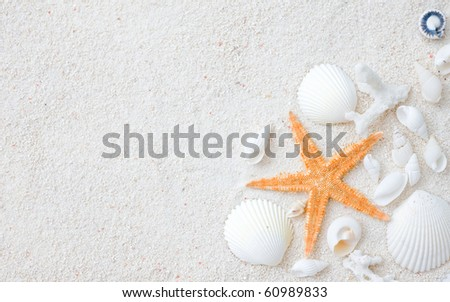 Beach with many seashells and starfish. - stock photo