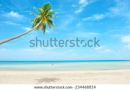 beach with palm tree over the sand