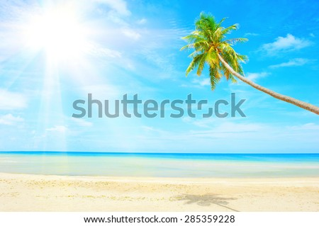 beach with palm tree over the sand - stock photo