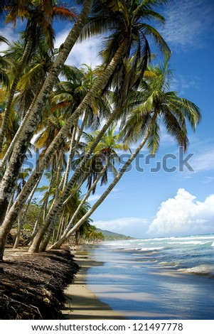 beach with palm trees and blue water - stock photo