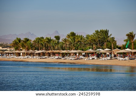 Beach with palm trees and sunshades in the Red Sea - stock photo