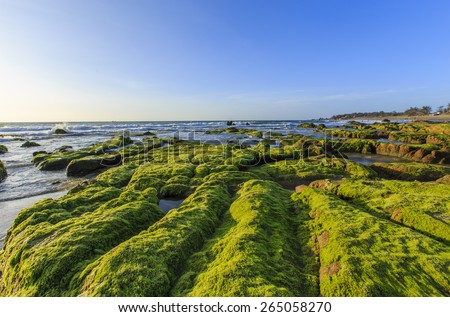 Beach with small patches of moss growing on the rocks with moss green beautiful sun damage dawn - stock photo