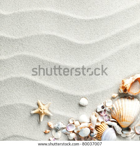 beach with starfish and seashells - stock photo