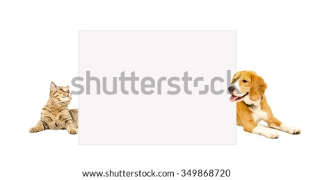 Beagle dog and cat Scottish Straight peeking from behind banner, isolated on white background - stock photo