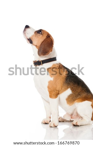 Rude dog Stock Photos, Images, & Pictures | Shutterstock